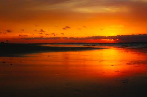 Immagine gratuita di acqua, ambiente, arancia