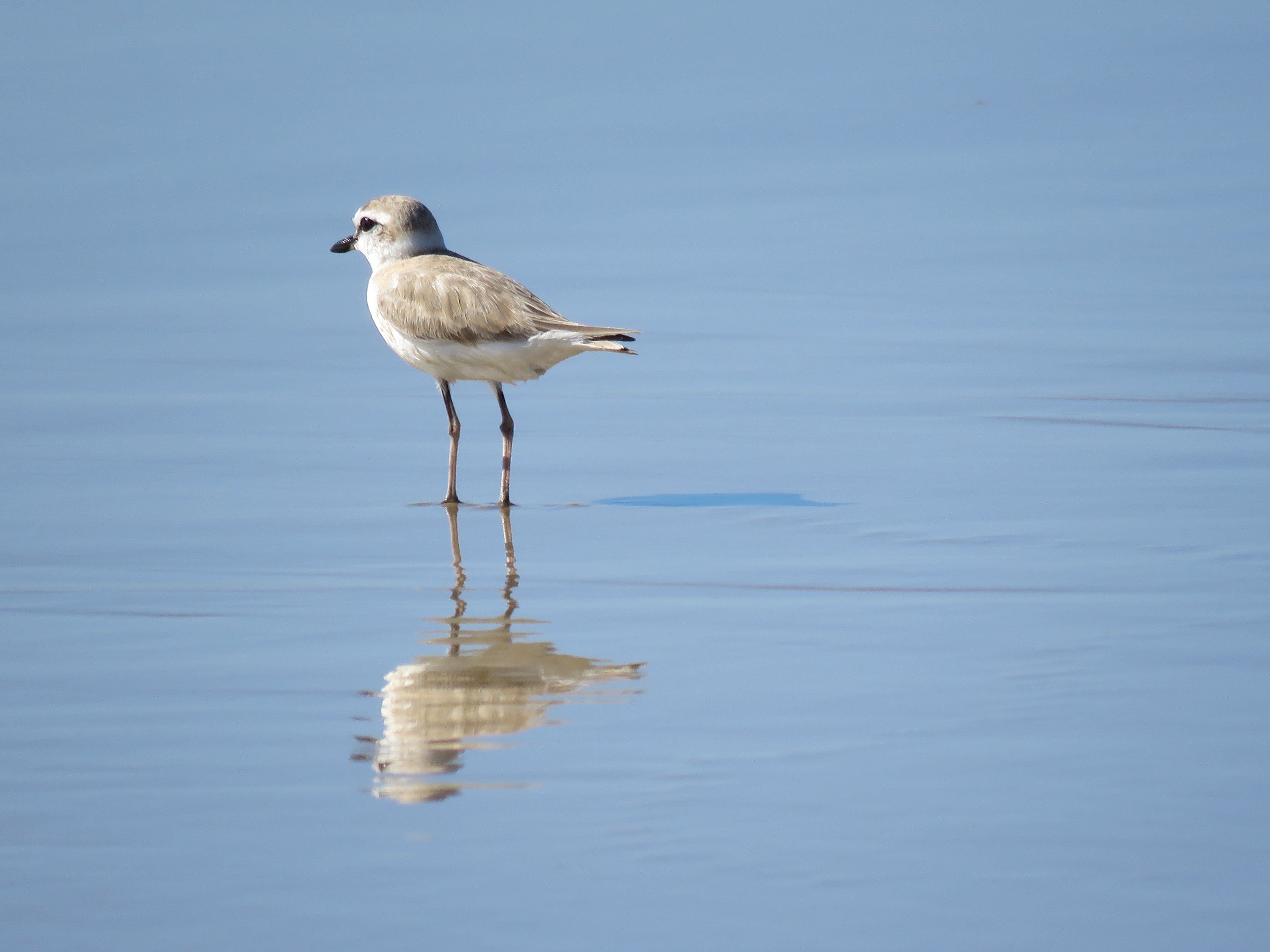 Free stock photo of bird, mozambique, wader