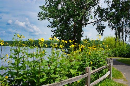 Immagine gratuita di estate, esterno, flowesr