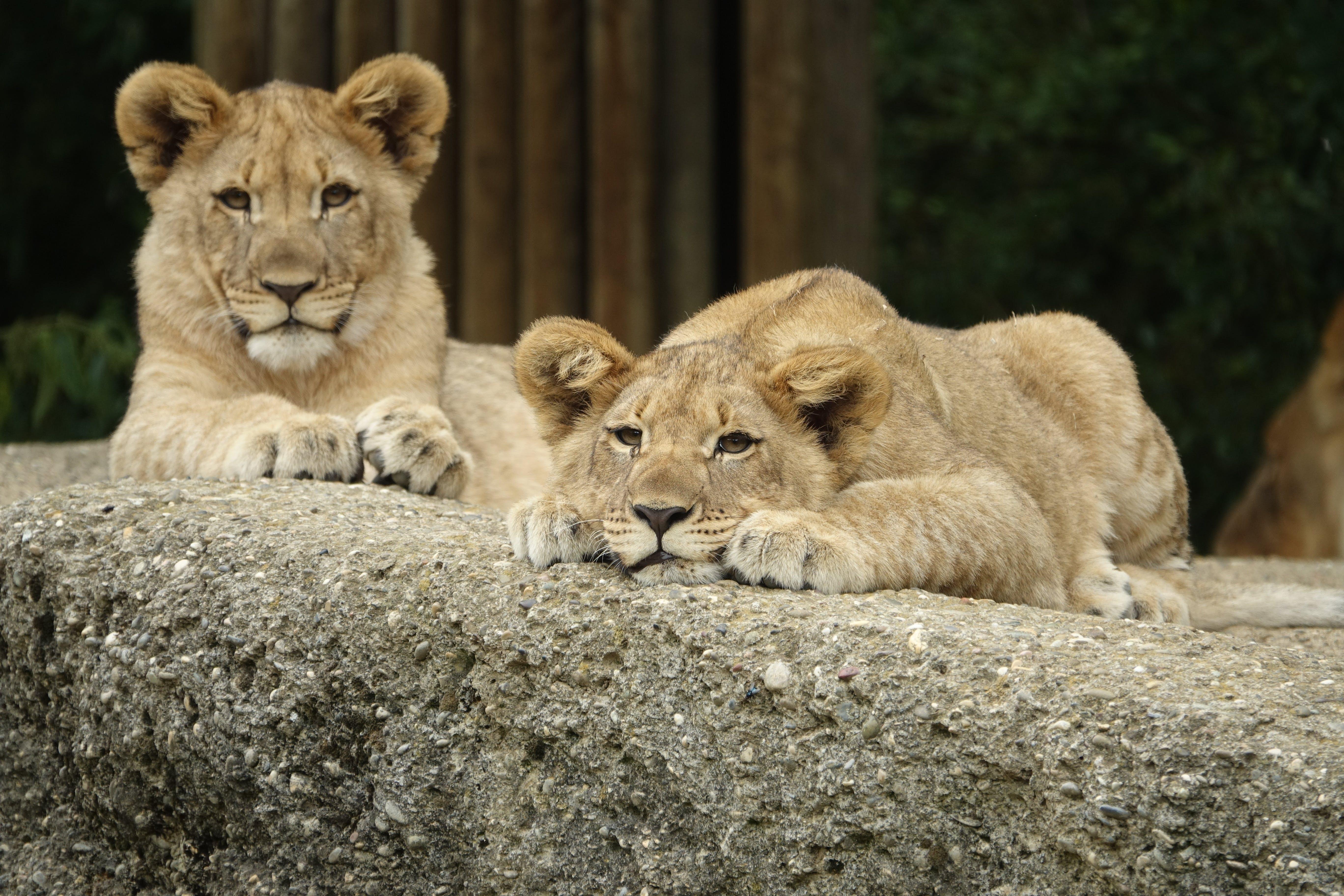 animal, animal photography, big