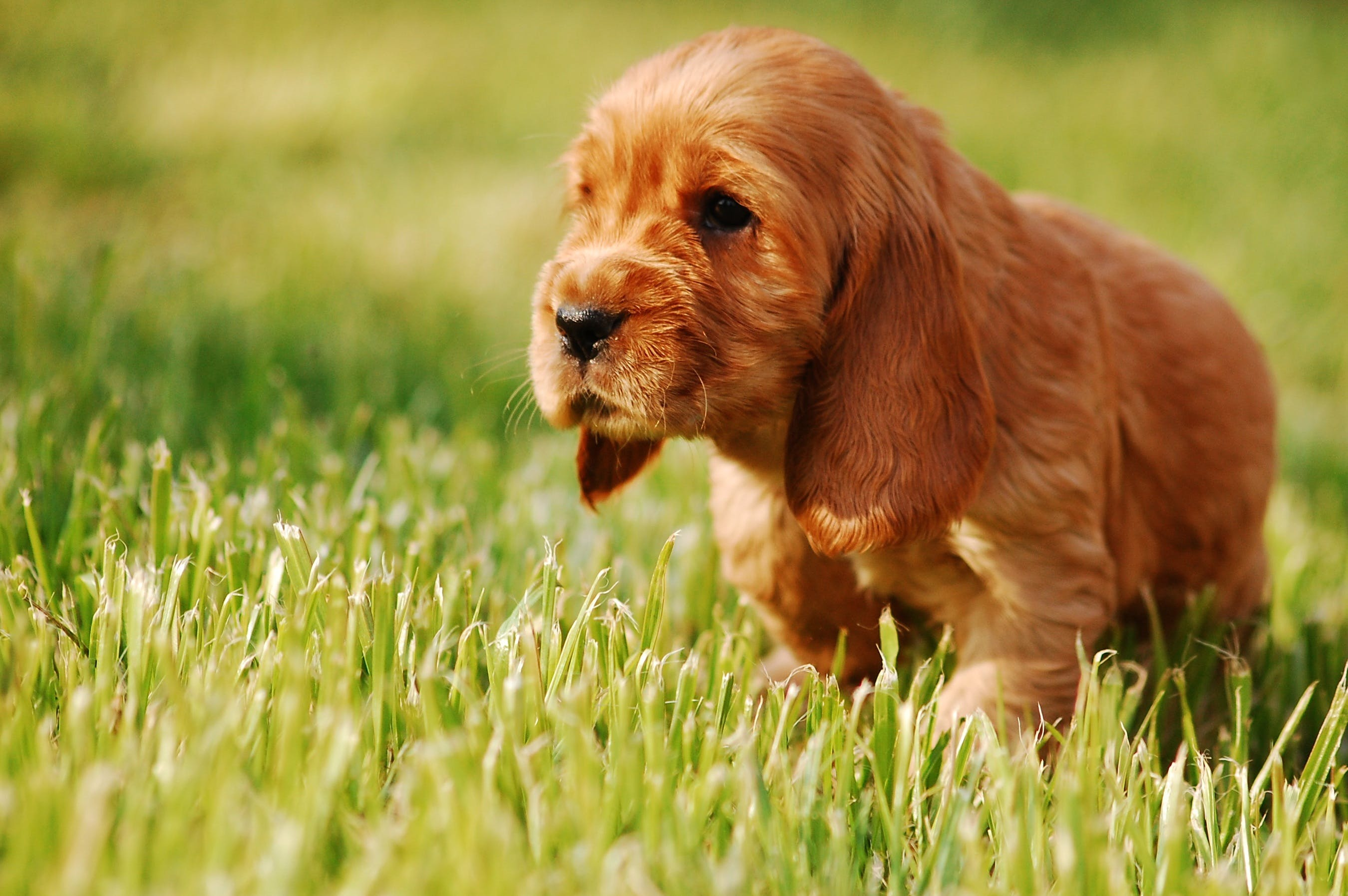 Selective Focus Photography of Short-coated Tan Puppy