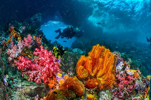 Divers Swimming Over the Corals