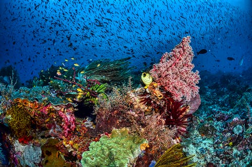 Colorful Coral Reefs Under Water