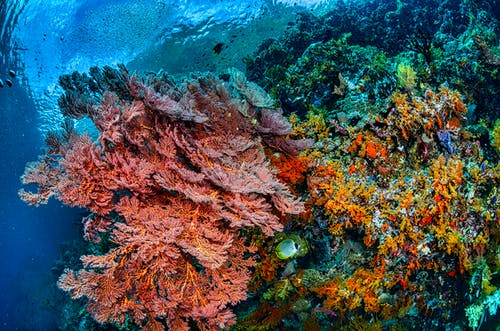 Brown and Green Coral Reef