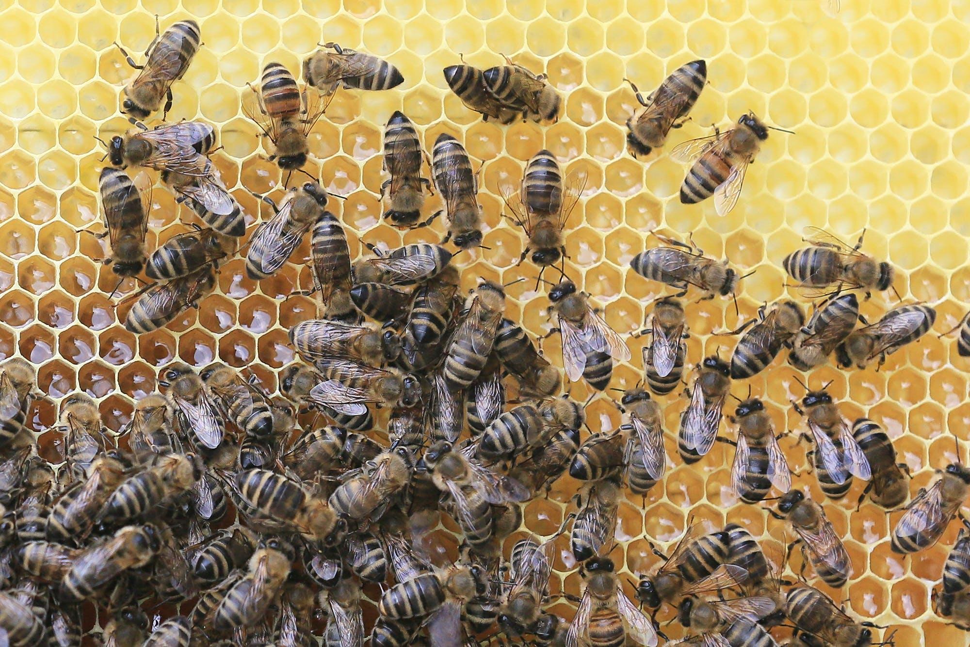 animal world, apiary, beehive