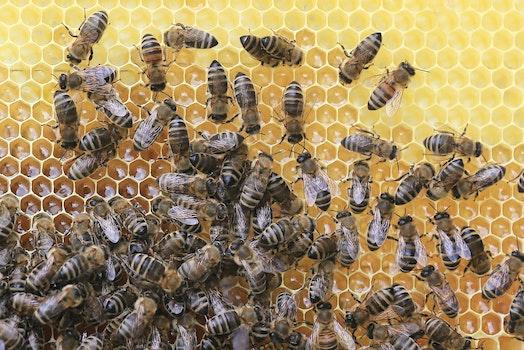 Free stock photo of nature, honeycomb, blur, wild