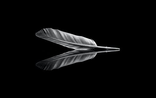 Black and White Feather Illustration