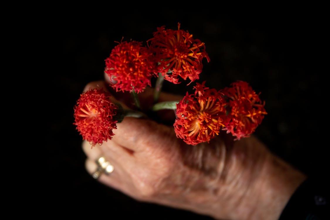 Person Holding Red Flowers in Tilt Shift Lens