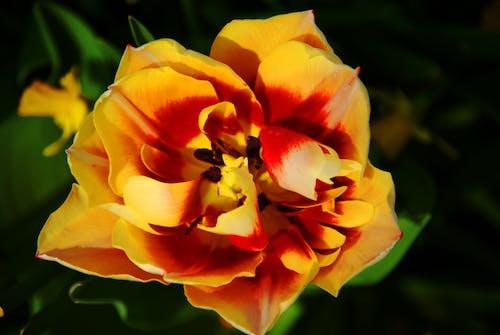 Gratis stockfoto met bloem, geel, goudgeel, mooie bloemen