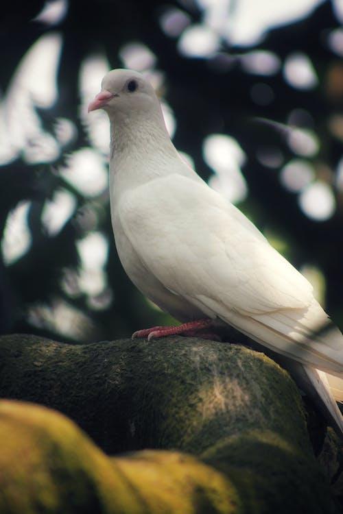 Bird with white plumage sitting on tree