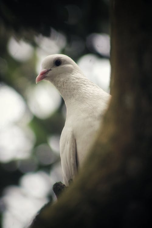 White pigeon on tree in nature
