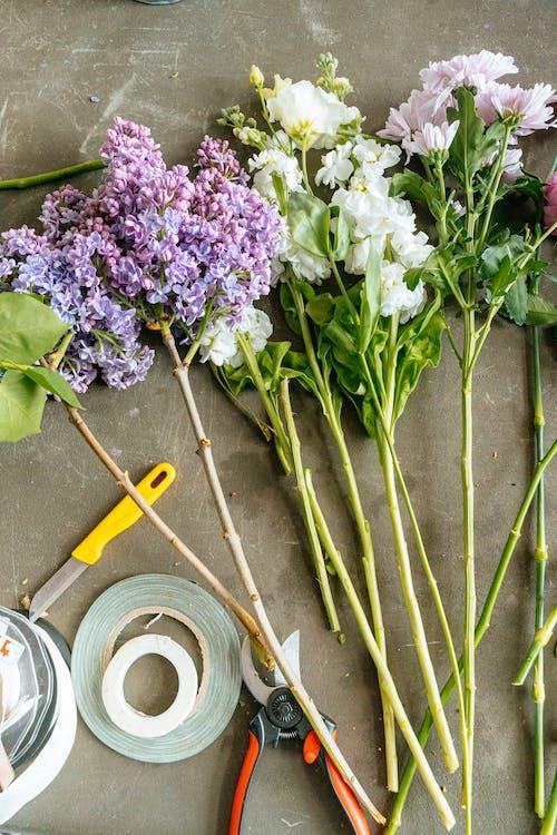 Darmowe zdjęcie z galerii z bukiet, kompozycja kwiatowa, krajalnica