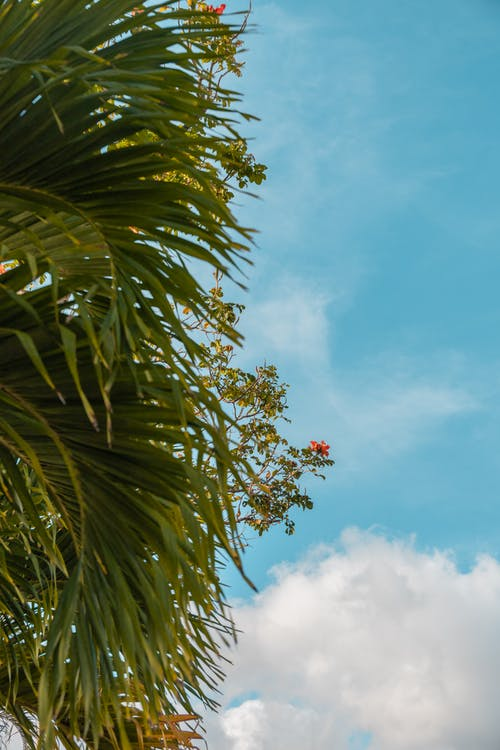 Green Palm Tree Under Blue Sky and White Clouds