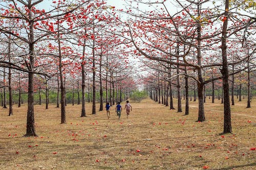 People Walking on Brown Grass Field Surrounded by Trees