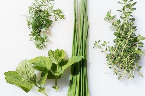 Foto profissional grátis de cebolinha, ecológico, erva, ervas