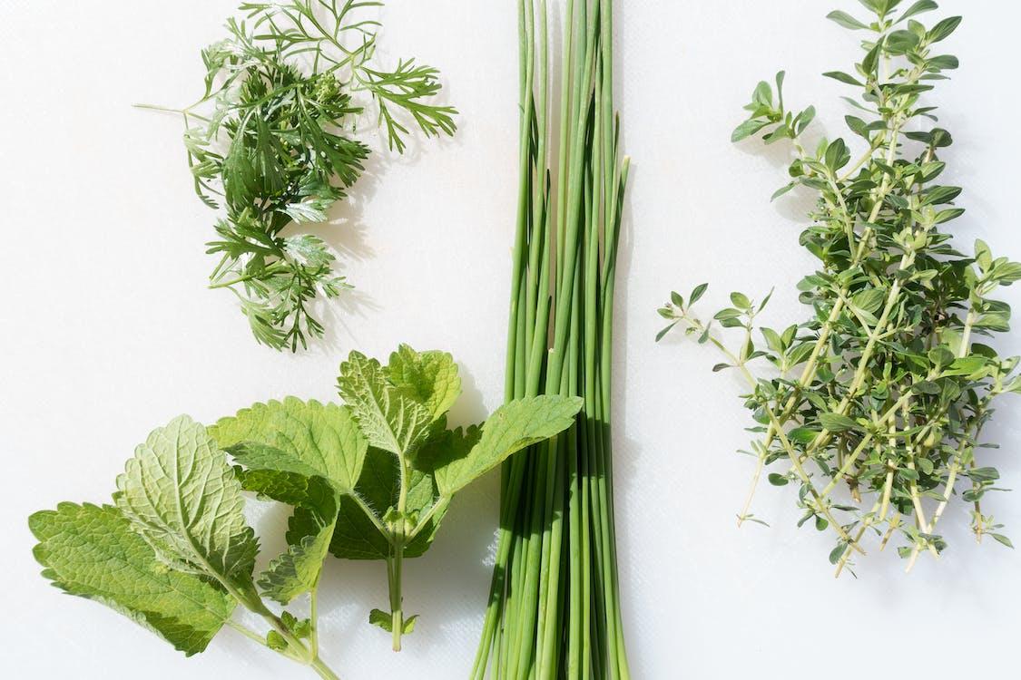 chives, herba, herbal
