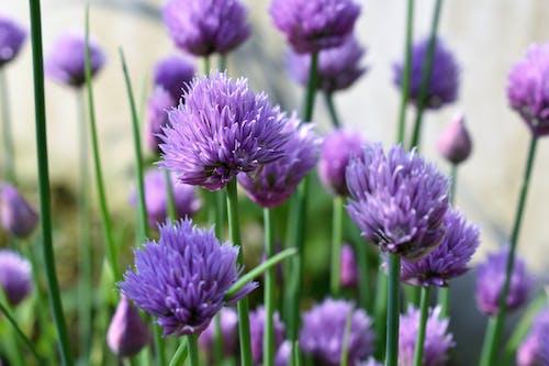 Бесплатное стоковое фото с ботанический, заводы, лепестки, поле