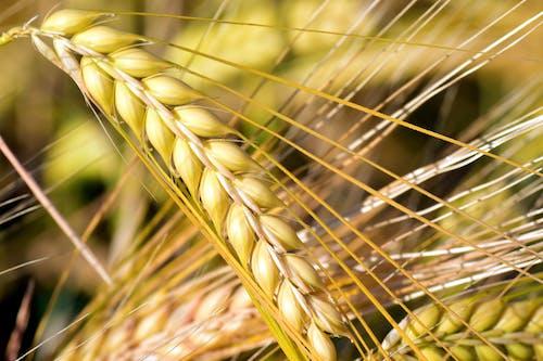 Бесплатное стоковое фото с зерна, максросъемка, пахотная земля, пашня