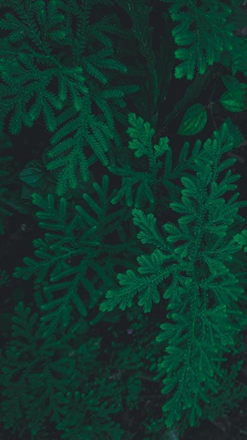 Immagine gratuita di foglie, lunatico, mobilechallenge