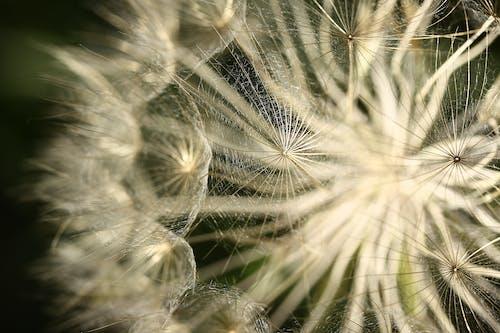 Photos gratuites de brillant, brouiller, croissance, environnement