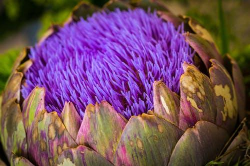 Kostnadsfri bild av blomma, blomning, botanisk, flora