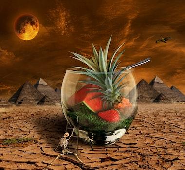 Free stock photo of desert, dry, orange, pineapple