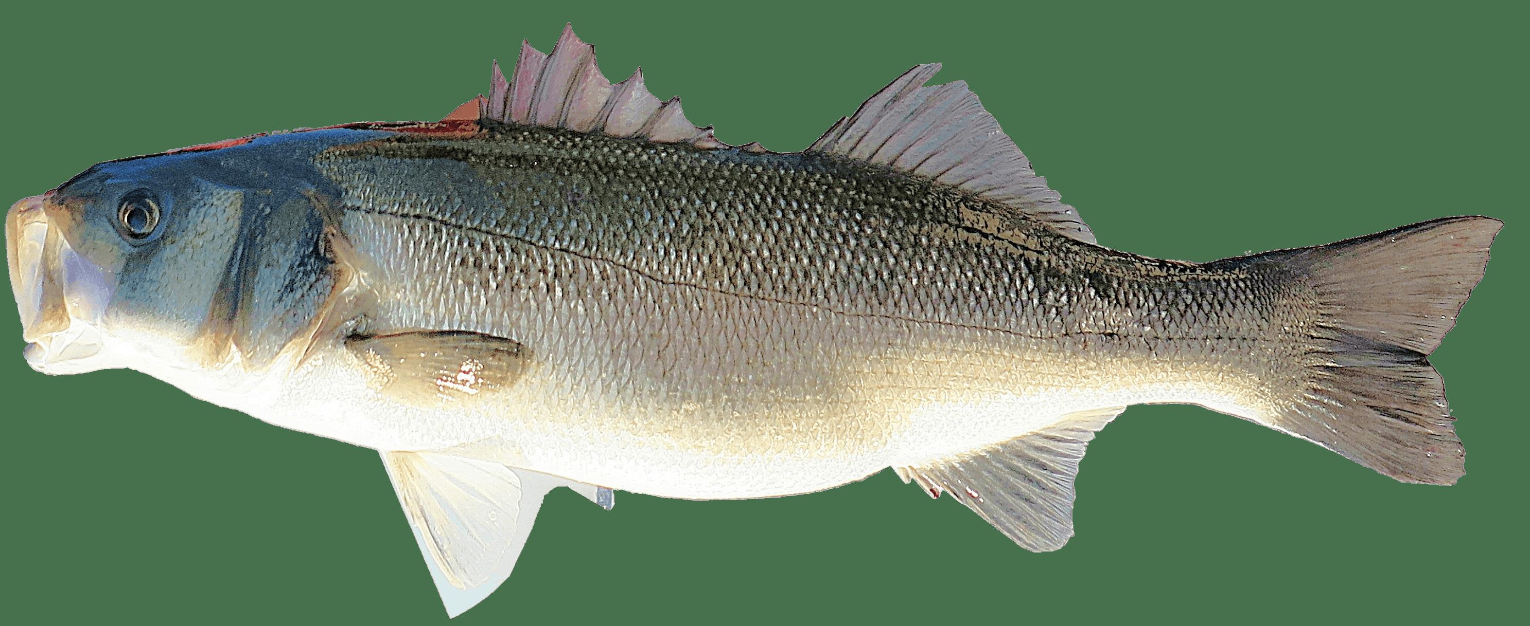 Kostenloses Stock Foto zu essen, ozean, fisch, meere
