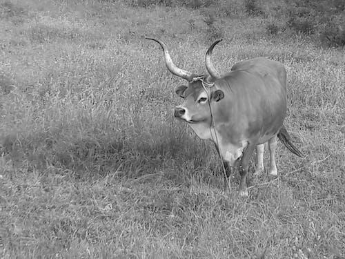 Fotos de stock gratuitas de al aire libre, campo de cultivo, cría de animales