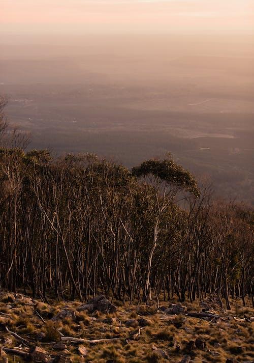 Free stock photo of nature, sunset, woodland