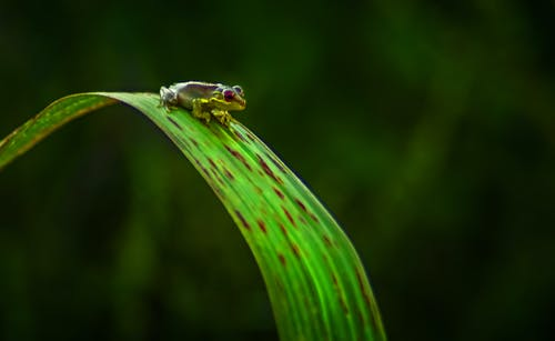 Small tree frog on bright green leaf