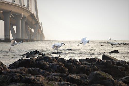 White Bird on Rocky Shore