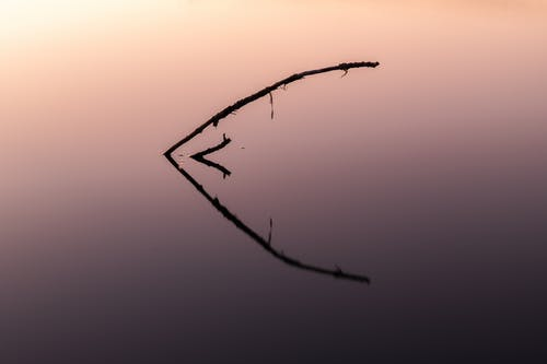 Leafless Tree Branch during Dusk