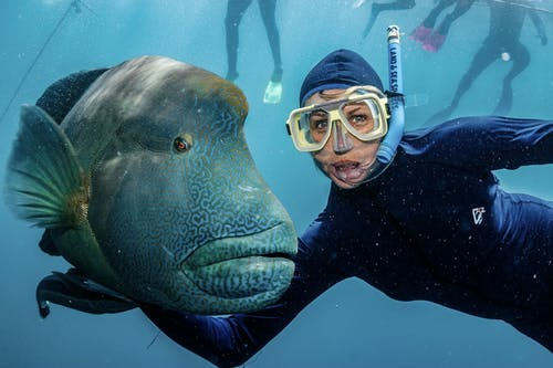 Content female traveler in diving suit and goggles embracing exotic fish while swimming under pure water and looking at camera