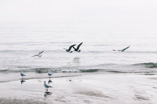 Foto profissional grátis de à beira-mar, água, animais selvagens, animal