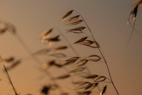 atardecer, fotografíade naturaleza, アート, エスピガの無料の写真素材