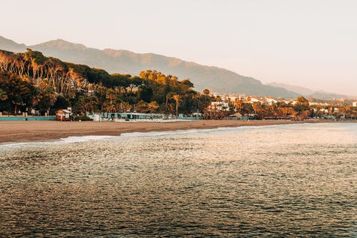 Sandy beach with high trees near rippling sea