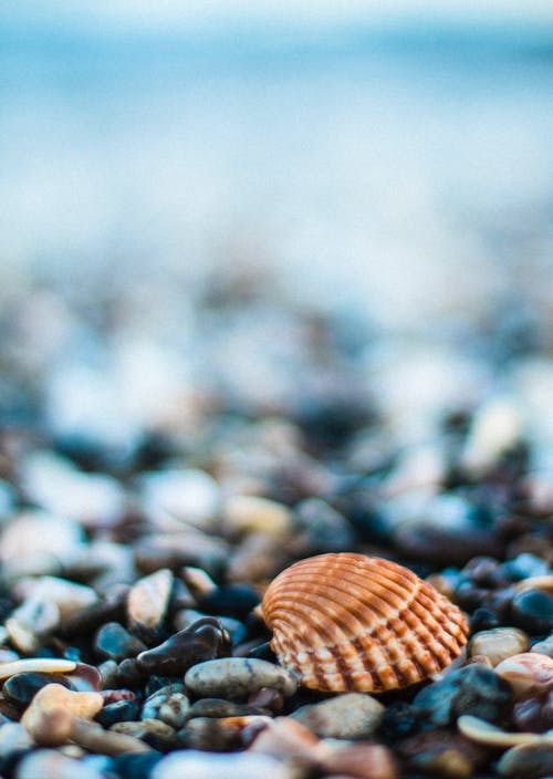 Wet stones on beach with seashell