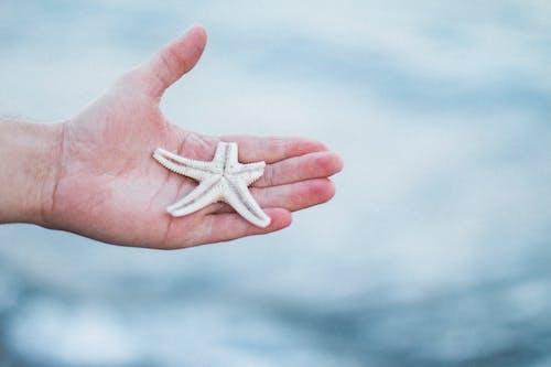 Foto profissional grátis de anônimo, ao ar livre, beira-mar