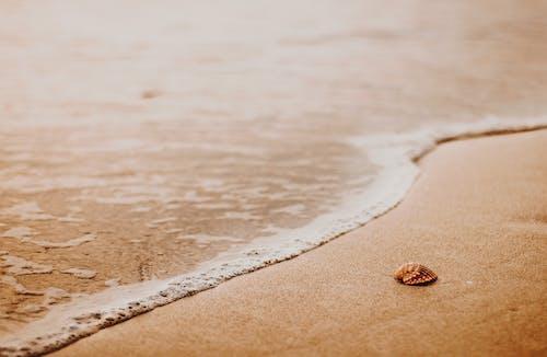 Sea wave on sandy beach with seashell