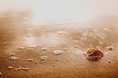 Small seashell on wet sand surface