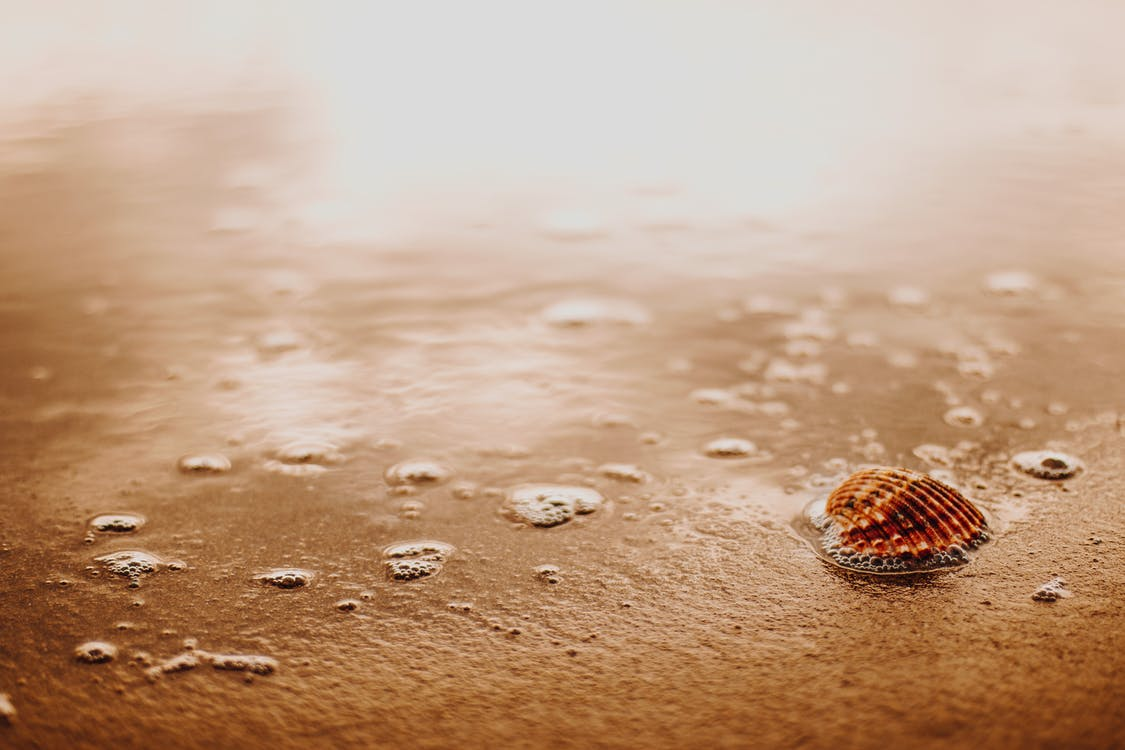 Small seashell on wet sand surface