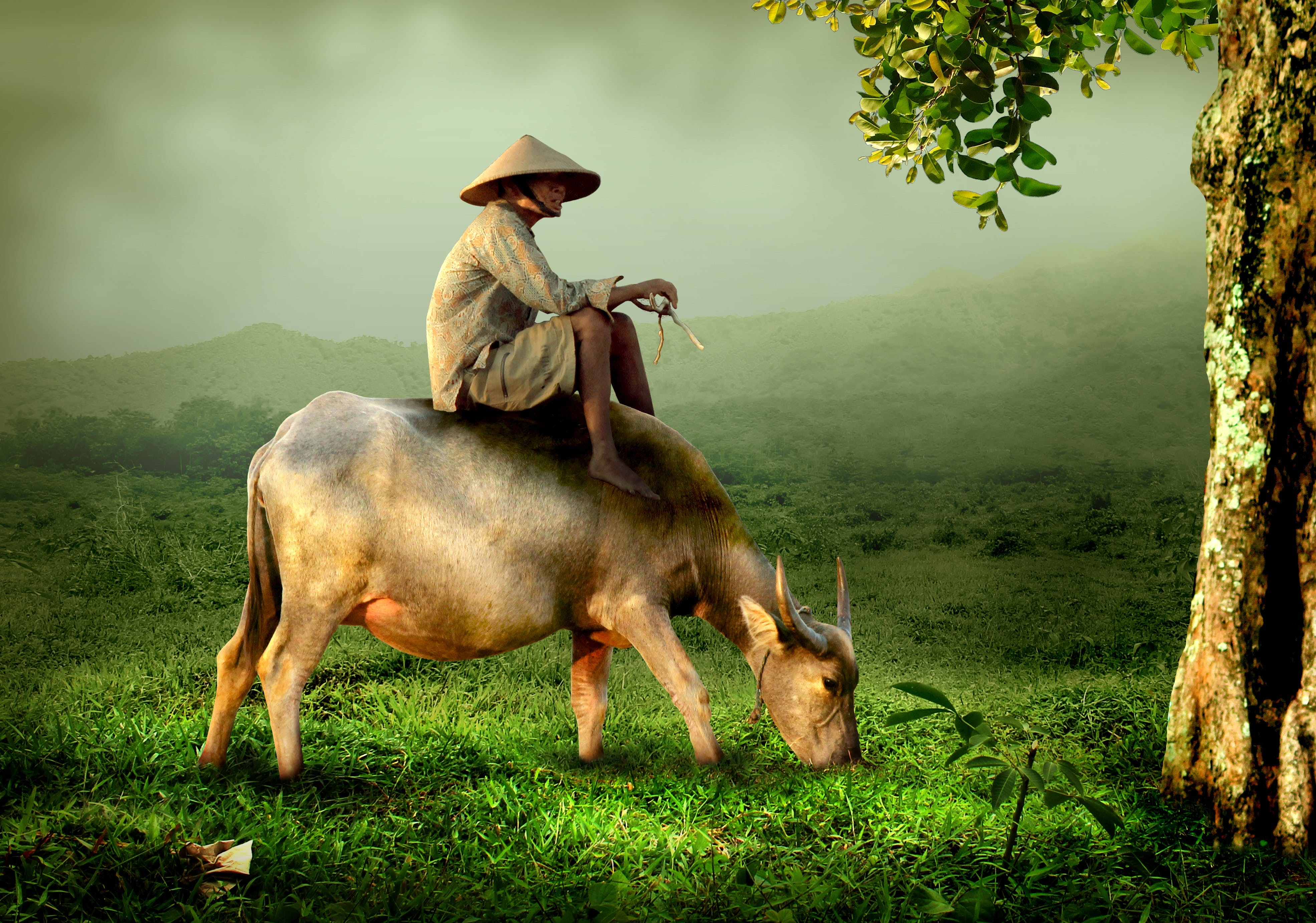 Man Sitting on Gray Buffalo Illustration