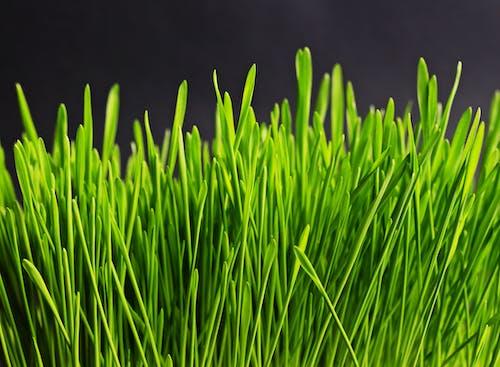 คลังภาพถ่ายฟรี ของ ต้นไม้, ธรรมชาติ, สีเขียว, โคลสอัป