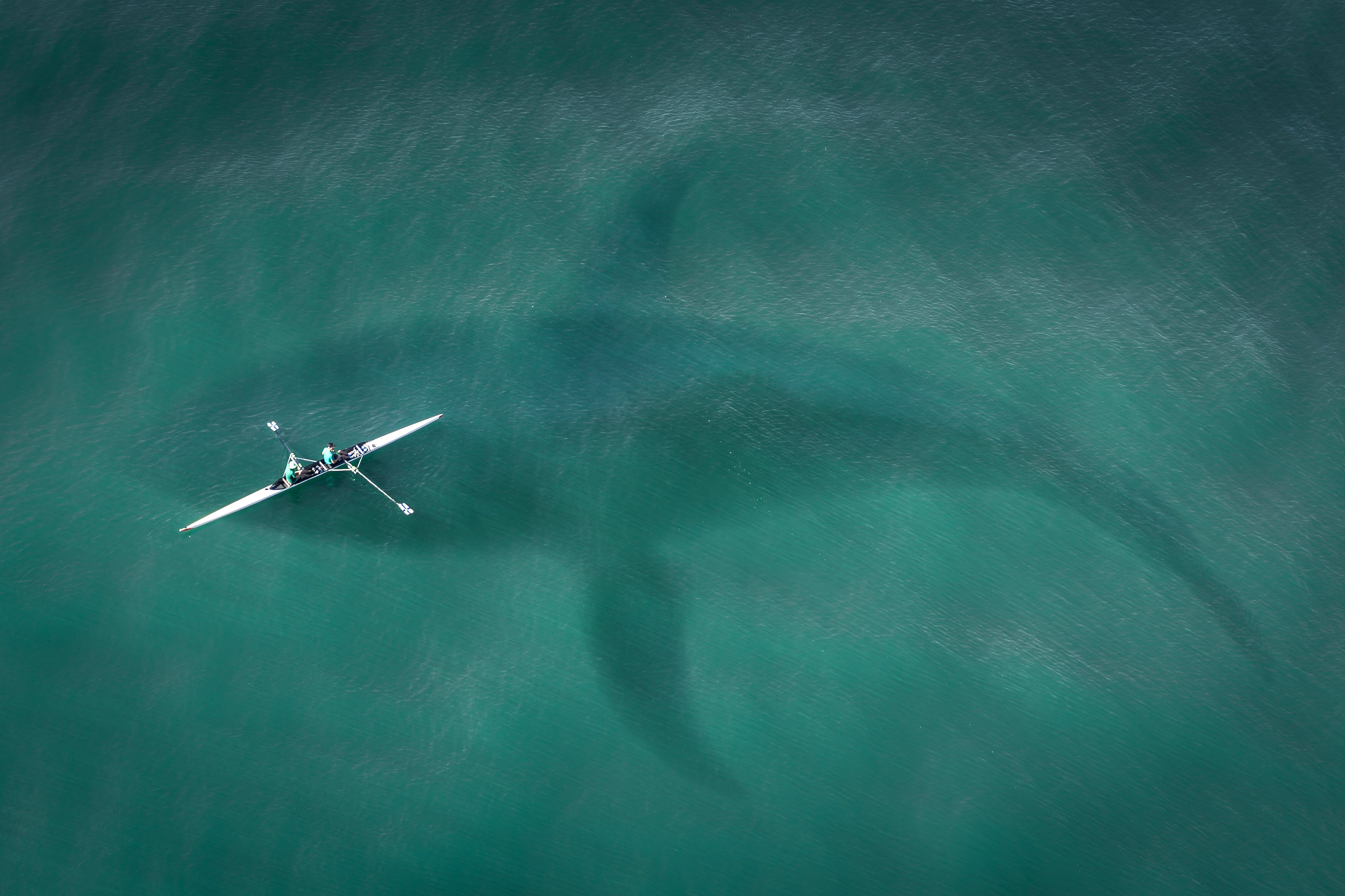 Free stock photo of abyss, attack, basking shark, bite