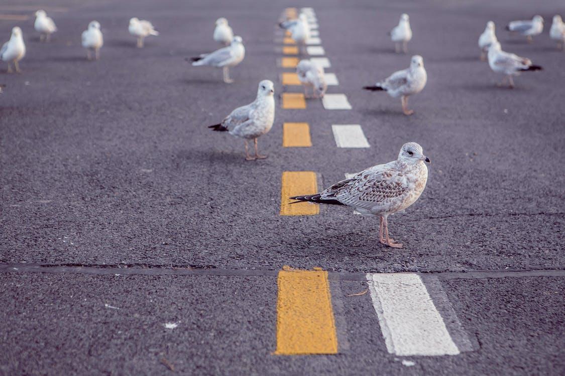 animale, asfalt, drum