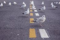 street, animals, birds