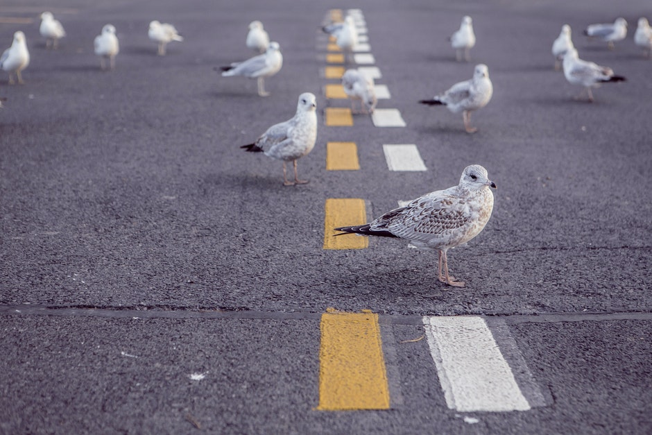 animals, asphalt, birds