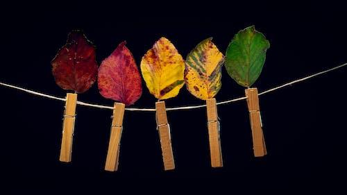Free stock photo of achtergrond, blad, bladeren