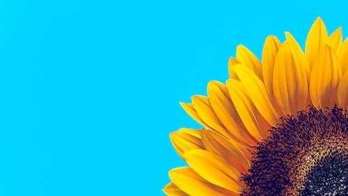 Free stock photo of achtergrond, blauw, bloeien