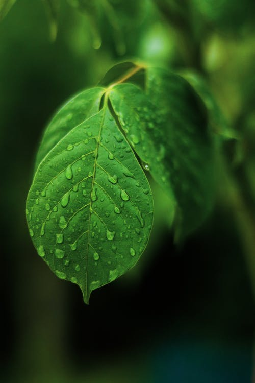 Close-Up Shot of a Green Leaf With Water Droplets